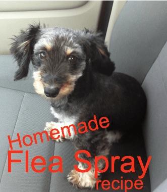 Homemade Homemade Flea Spray for dogs