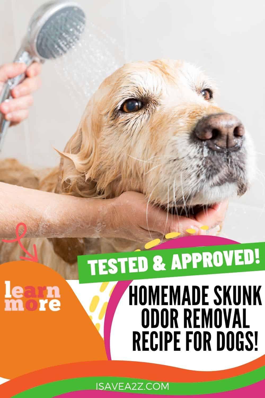 Homemade Skunk Odor Removal Recipe for Dogs