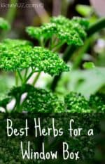 Best Herbs for a Window Box