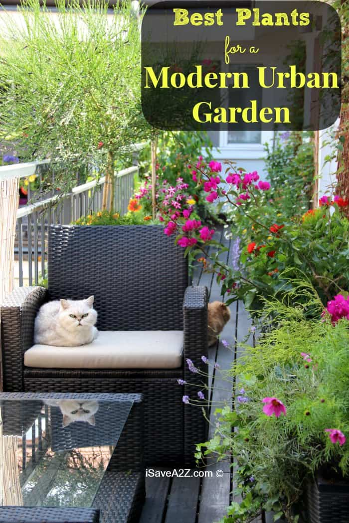 Best Plants for a Modern Urban Garden