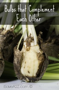 Bulbs that Complement Each Other