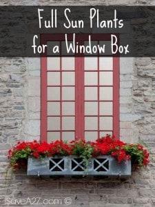 Full Sun Plants for a Window Box