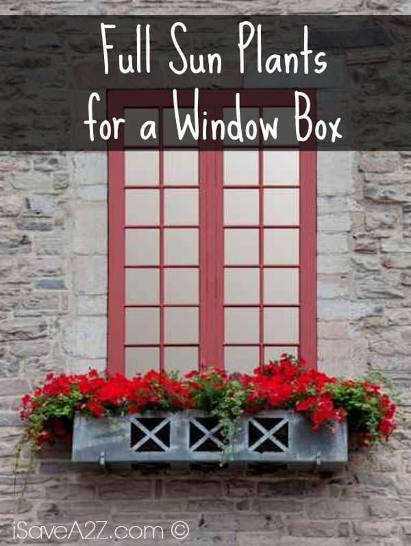 Full Sun Plants For A Window Box Isavea2z Com