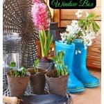 Planting a Spring Bulb Window Box