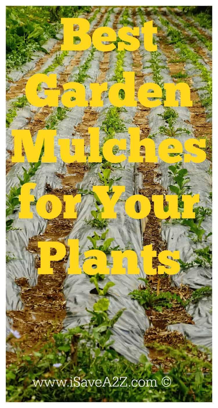 Best Garden Mulch for Your Plants