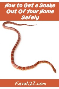 How to Get a Snake Out Of Your Home Safely