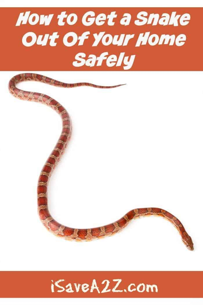 How To Get A Snake Out Of Your Home Safely Isavea2z Com