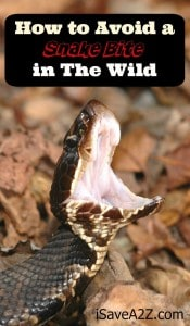 How to Avoid a Snake Bite in the Wild