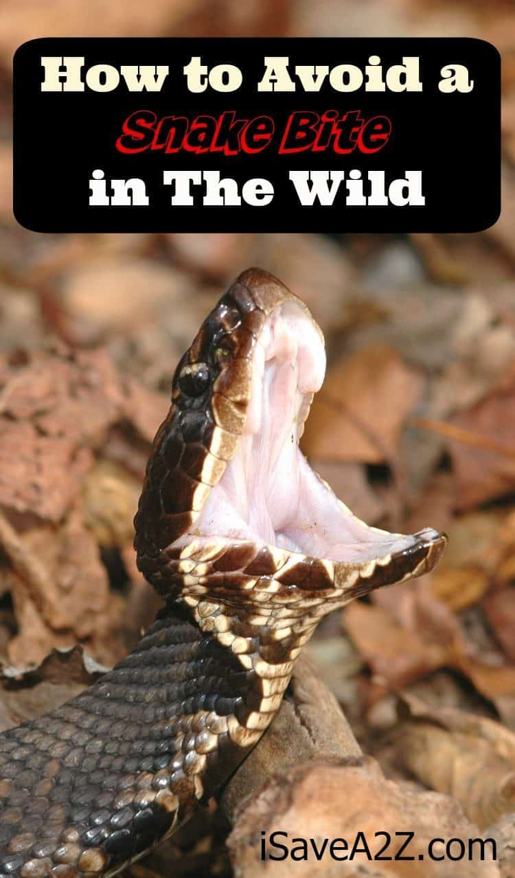 How to Avoid a Snake Bite in the Wild - iSaveA2Z.com
