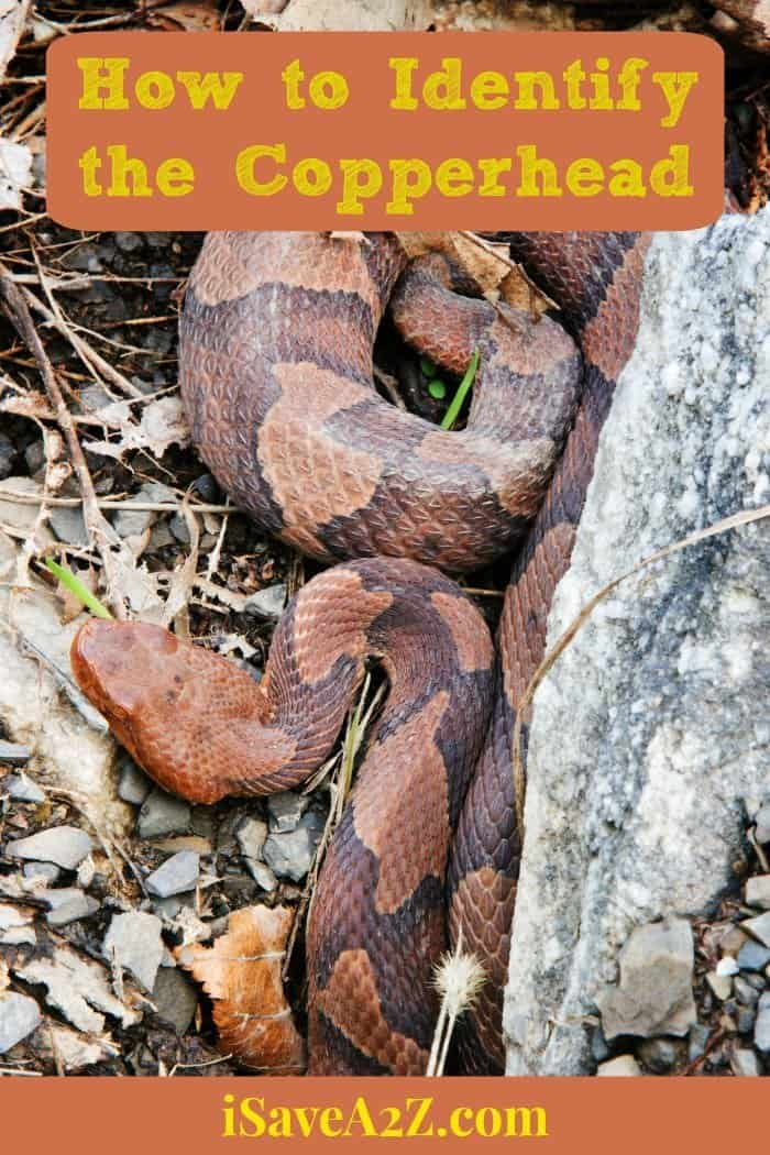 How to Identify the Copperhead - Country Living Tips ...
