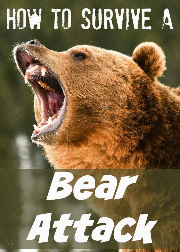 How To Survive A Bear Attack Isavea2z Com