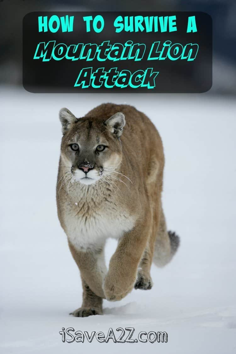 How to Survive a Mountain Lion Attack - iSaveA2Z.com