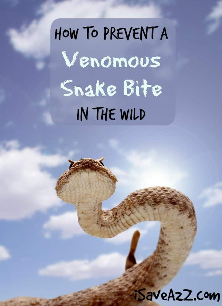 How to Prevent a Venomous Snake Bite in the Wild
