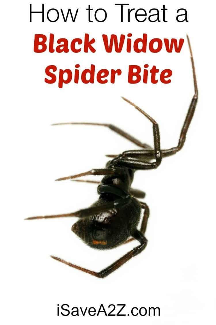 How To Treat A Black Widow Spider Bite Isavea2z Com
