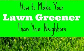 Learning how to make your lawn greener is really just about providing the basics. It is not a complicated thing but it does take some time and persistence.