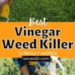 Weed Killer Home Remedy with this homemade weed killer using vinegar
