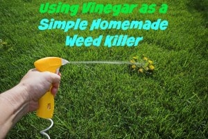 Using Vinegar As A Simple Homemade Weed Killer